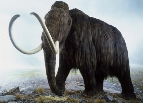 Vyvraždili velké pravěké savce lidé?