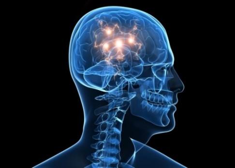 Za ztrátu paměti mohou přemnožené proteiny