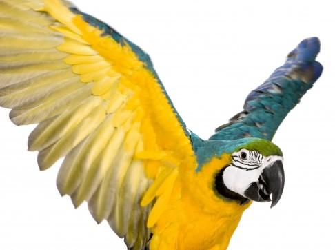 Obrázek 7 palce ptáka