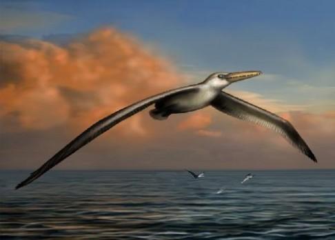 Vědci objevili obřího pravěkého ptáka