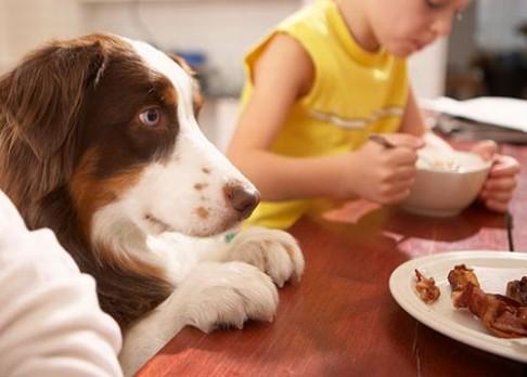 Chce pes vaše jídlo? Ví proč!