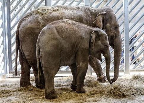 Praha má dvě nové slonice