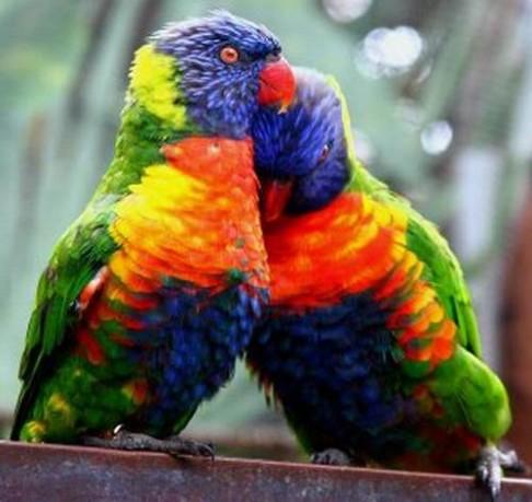 V porovnání s ptáky jsme barvoslepí