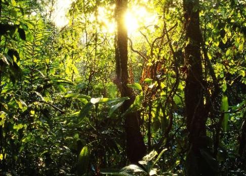 Světelný smog ničí pralesy