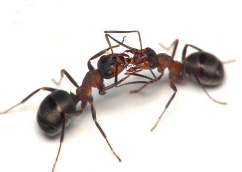 Superorganismus aneb Co nového v hmyzích státech?