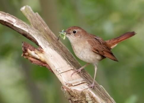 Ptačí zpěv přivítají procházky do přírody