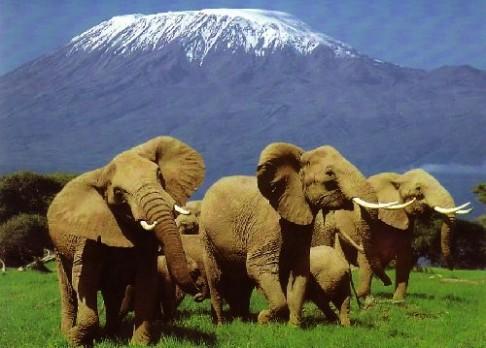 Rozumí sloni lidské řeči?