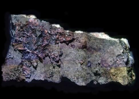 Evropané koření již 6000 let