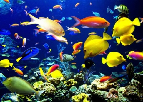 Kyselost oceánů roste závratnou rychlostí