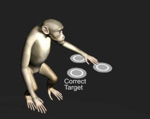 Počítač ovládaný opičím mozkem