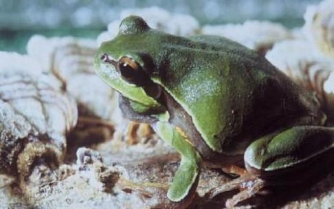 Válka hub proti žabám