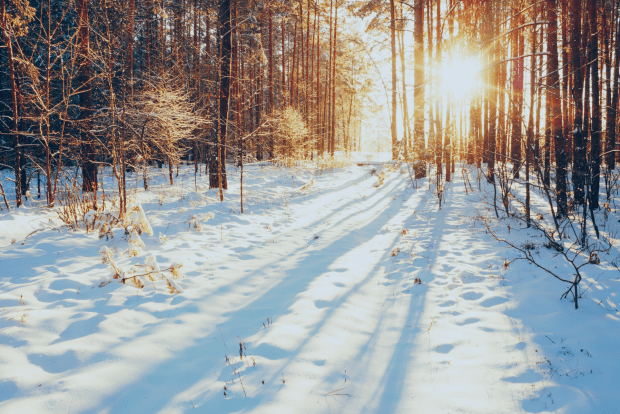 photo shows sunny, snowy woods