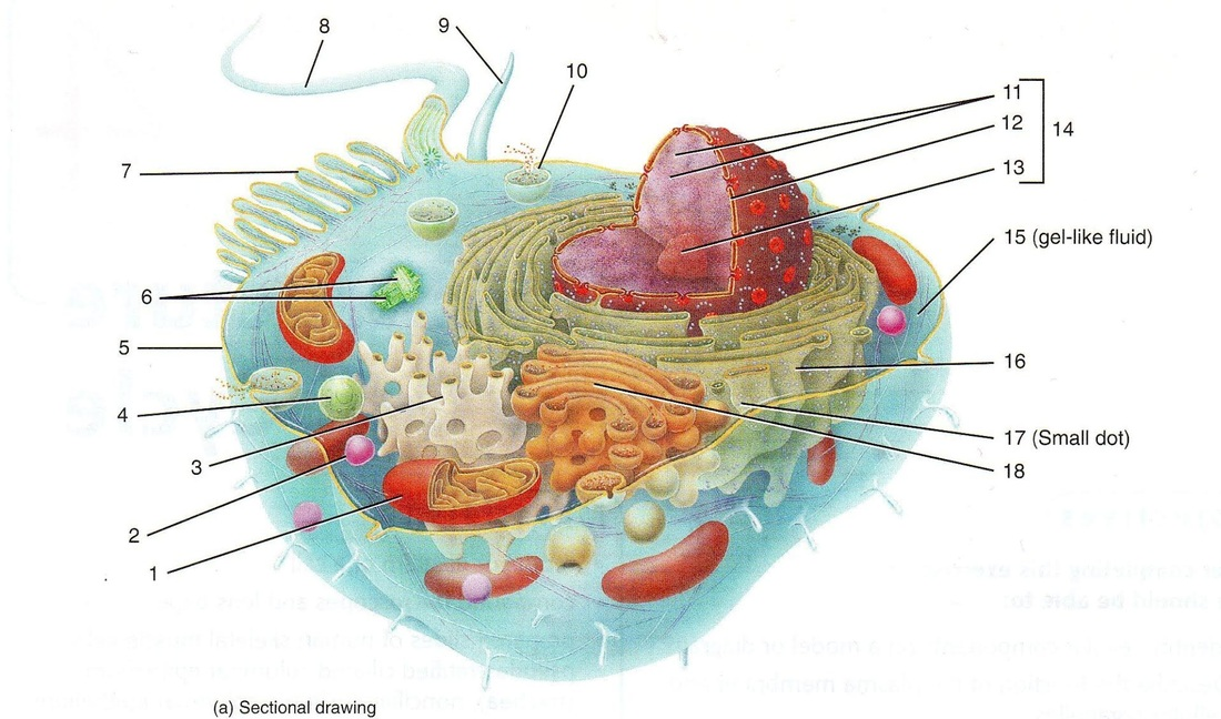 what is a cell diagram two switch light circuit eukaryotic an introduction to the biology of cells picture