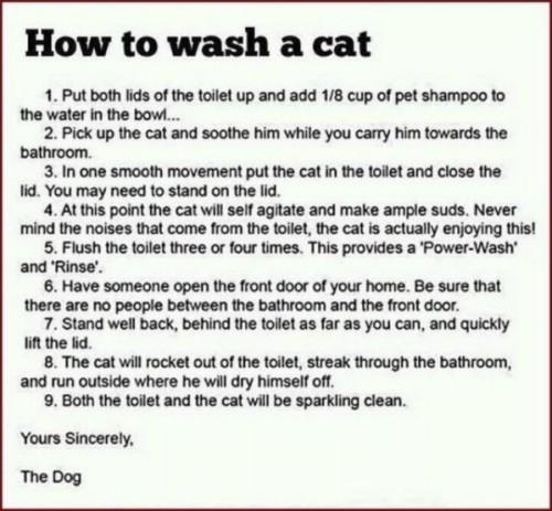 lavage de chat