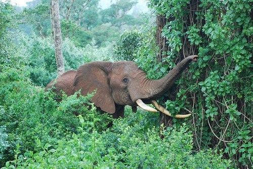 cute boho elephant nature forest tropical jungle tropics tropical blog  drkwoods darkw00ds •
