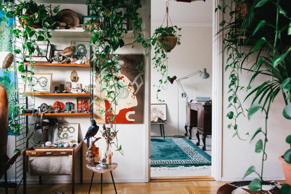 Home Interior houseplants indoor plants freuden von