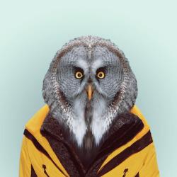 OWL por Yago Partal para ZOO RETRATOS