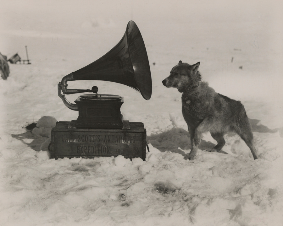 To entertain the men, Captain Robert Scott took a gramophone on his South Pole Expedition. Chris, one of his dogs, was apparently also a fan, September 1911.Photograph by Herbert G. Ponting, National Geographic