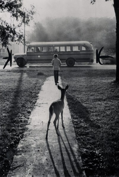 weirdvintage:The pet fawn of Brad Curry of Galesburg, Michigan, watches him depart from home every morning on his schoolbus, 1960 (via Vintage Photos LJ)