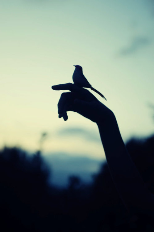 PLEASE FLY AWAY<br /> AND BE FREE.<br /> WAIT!<br /> NO MAYBE,<br /> STAY AWHILE LONGER<br /> WITH ME.<br /> LOVE POSES SUCH DILEMMAS.