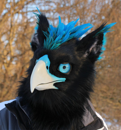 Cute Wolf Pup Wallpaper Bird Mask Costume Griffin Fursuit Gryphon Avian Griffon