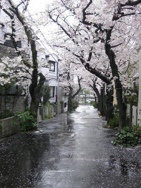Kawaii Pastel Anime Girl Wallpaper Tree Anime Japan Kawaii Photo Street Manga Cherry Blossom