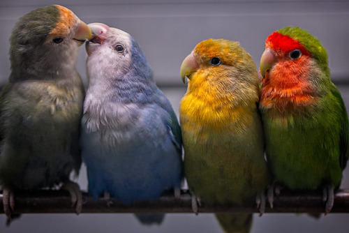 simply-beautiful-world:</p> <p>BIRDS OF A DIFFERENT FEATHER<br /> FLOCK TOGETHER.<br /> WHY IS THIS SO HARD FOR HUMANS?<br />