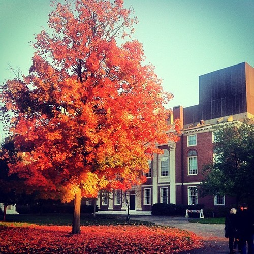Foliage at HBS