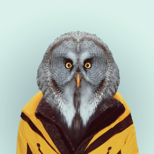 OWL by Yago Partal for ZOO PORTRAITS