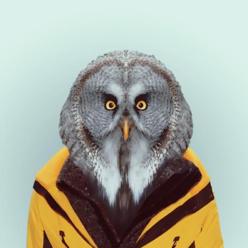 OWLbyYago PartalforZOO PORTRAITS