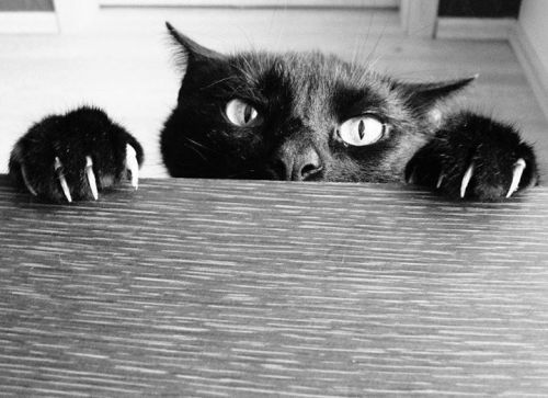 I'm keeping an eye on you.<br /> Have you read The Dead Game yet?<br /> If not, I know where you live.
