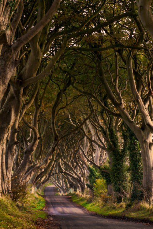 </p> <p>The Dark Hedges (Northern Ireland) by Maximilian Pilz </p> <p>Let's take a walk through the trees.<br /> The sun is still shining.<br /> We go deeper into the forest.<br /> The trees begin to bend over, little by little.<br /> How could this be happening?<br /> The limbs are reaching down to us,<br /> Trying to grab us.<br /> Like fingers, reaching for us.<br /> Let's make a run for it. Now!<br />