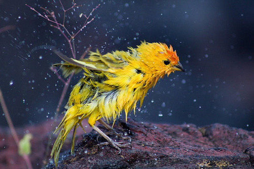 Cute Wet Bird