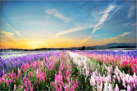 """Flower Picture of Bright flowers in field"""
