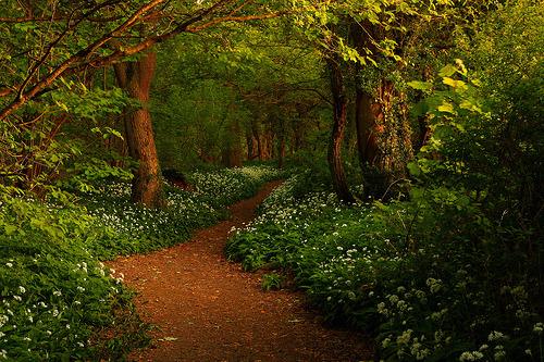 пътека в гората