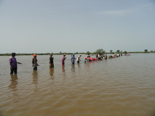 Reforestando manglares en Gambia - TRY Oyster Women's Association
