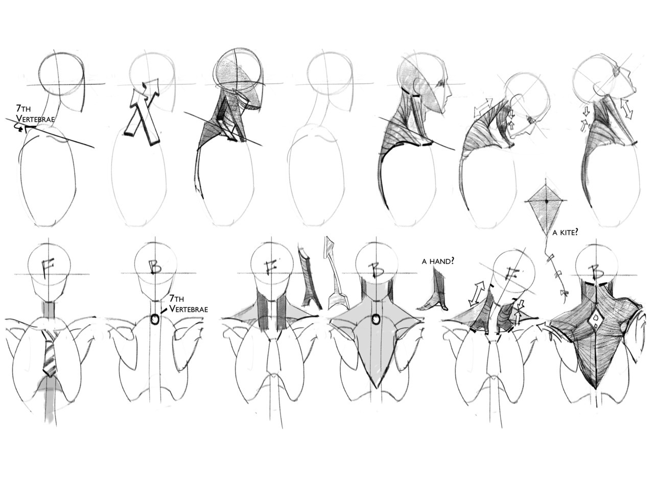 Human Skeleton Reference