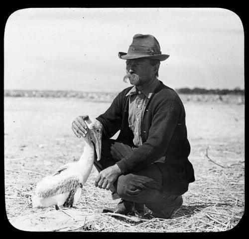 En esta fecha en 1903, el presidente Theodore Roosevelt designó Pelican Island en Florida como el refugio de vida silvestre por primera vez en los Estados Unidos.  El Refugio Nacional de Vida Silvestre del sistema, administrado por los EE.UU. Fish and Wildlife Service, es el primer sistema mundial de tierras y aguas públicas reservadas para la conservación de los peces de los Estados Unidos, la fauna y las plantas.  Desde 1903, el Sistema ha crecido hasta más de 150 millones de acres, 556 Refugios de Vida Silvestre y otras unidades del Sistema de Refugio, además de 38 districts.In manejo de los humedales esta foto, el primer empleado de la Pelican Island National Wildlife Refuge, Pablo Alcaide Kroegel , se arrodilla con una Pelican.Photo: USFWS