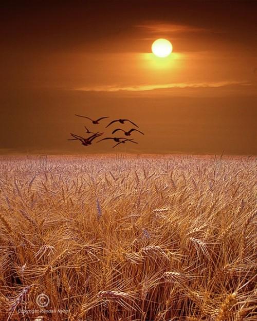 Sun, sunset, sunrise, walt whitman, birds, wheat, farm, poem, beautiful, God, nature, life, lifestyle, peace
