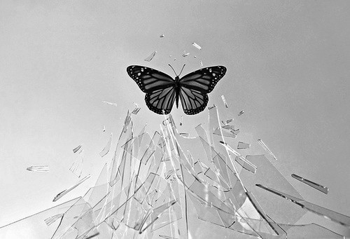 Jennifer Brower, butterfly