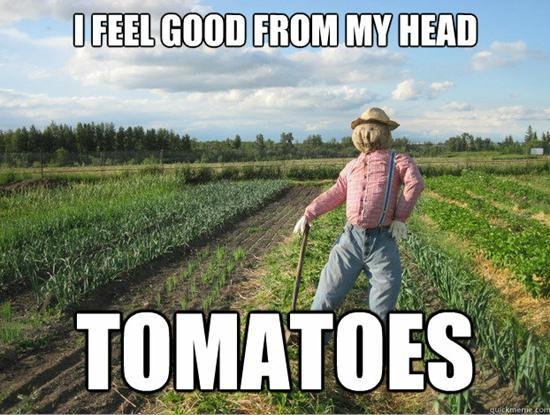 i feel good from my head tomatoes