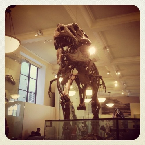 I am a t-Rex, hear me roar! (Taken with Instagram)