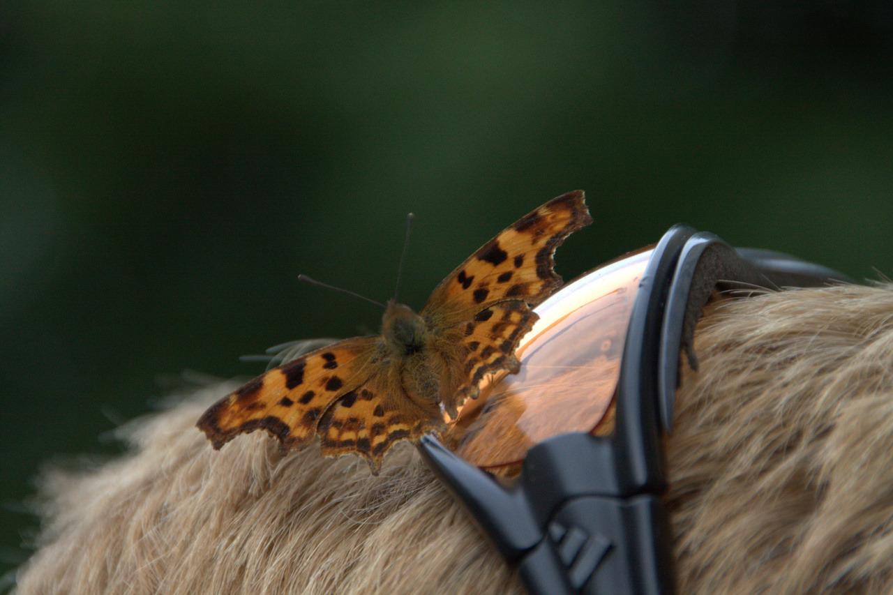 Schmetterling auf Sonnenbrille
