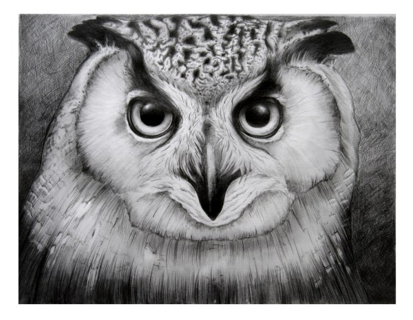 20 Owl Drawing Tumblr Pictures And Ideas On Meta Networks