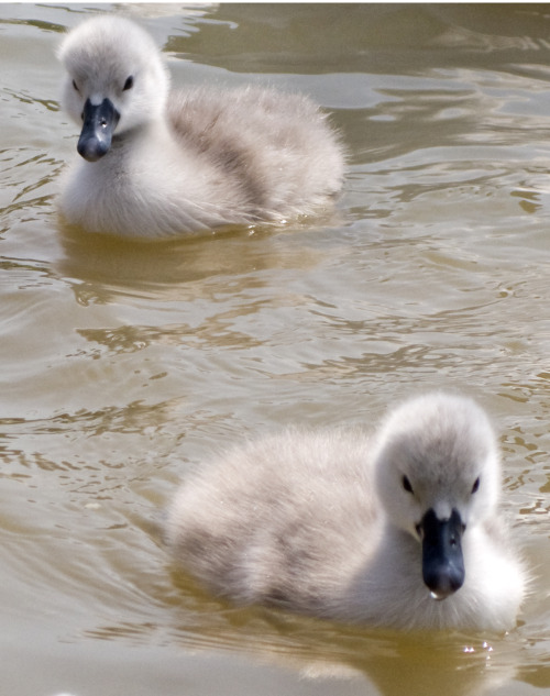 thefluffingtonpost: PHOTO OP: Fluff on the Pond Via TheTherapist.