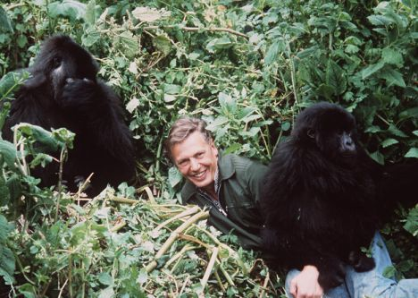 Attenborough, Life on Earth
