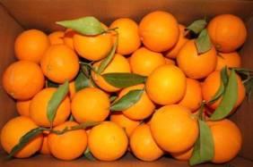 valenciaorangesNARANJAS-DEL-TURIA-Comprar-naranjas-de-Valencia-13