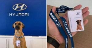 Un câine a intrat în echipa unui dealer Hyundai din Brazilia