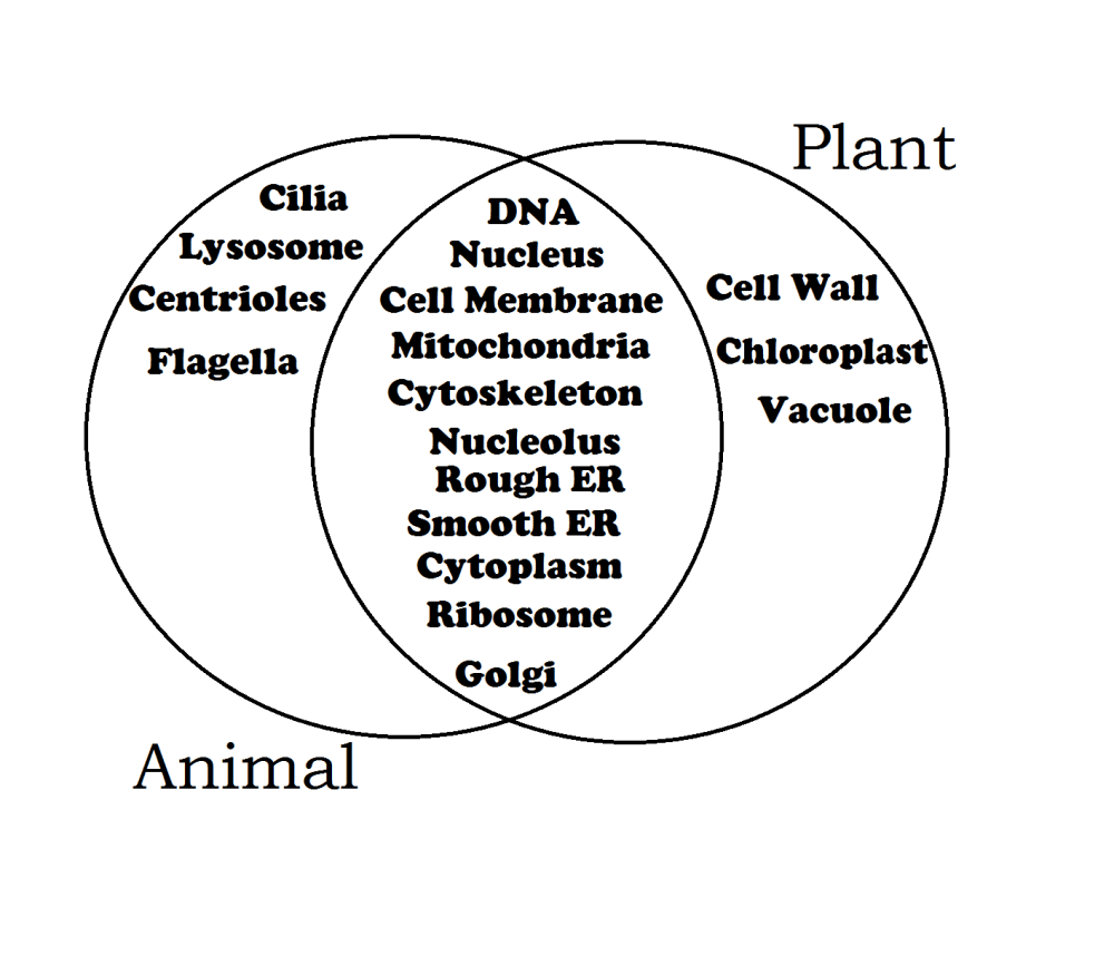 medium resolution of plants biology en flora plants glogster edu interactive venn diagram animal cell vs plant cell webquest plant cell vs animal cell venn diagram