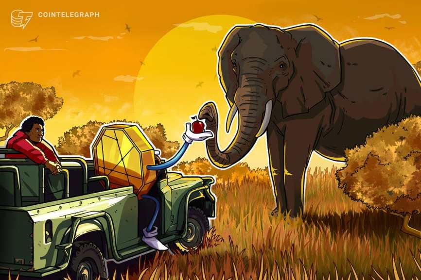 Africa's crypto market has grown by more than 1,200% since 2020: Chainalysis